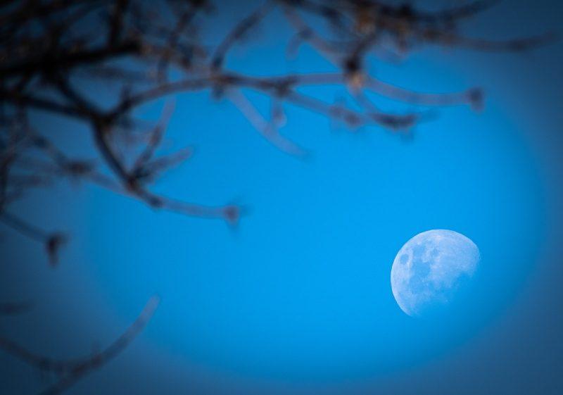 full moon over bare tree