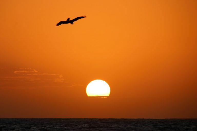 bird near sun